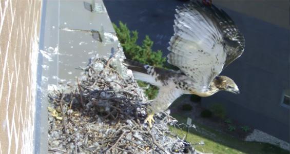 last chick flies